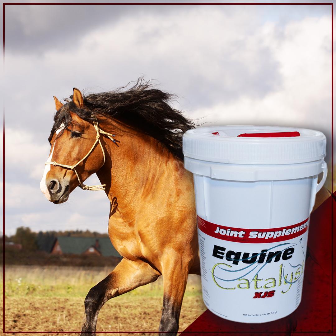 Joint Supplement Joint supplement, Horse vitamins