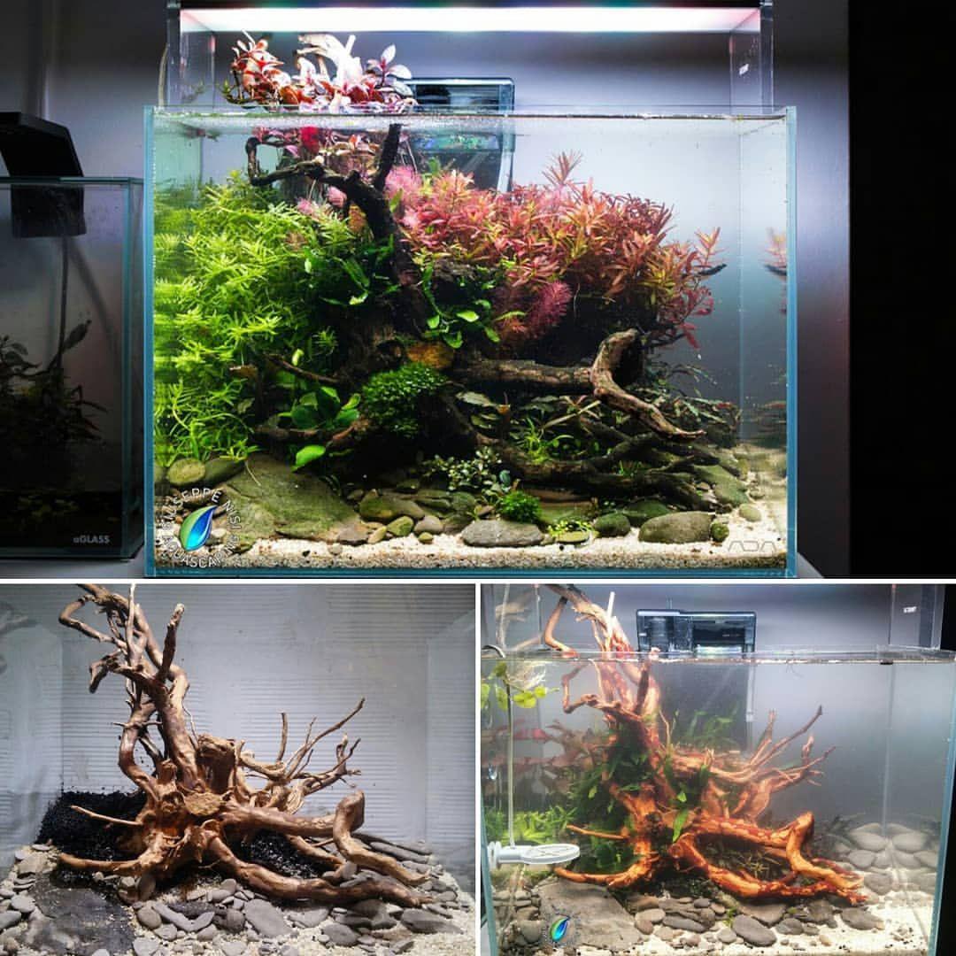 Aquarium Tips On Aquascapes