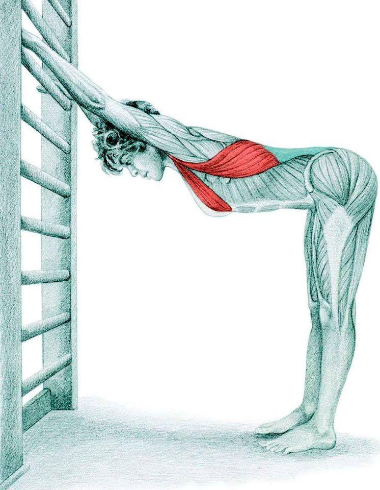 Aca les envio ejercicios de elongación para varios grupos musculares ...