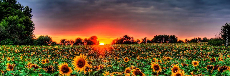 field of sunflowers twitter header cover twitrheaders com things