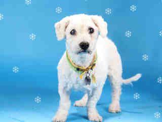 St Louis Pet Adoption Pet Adoption Humane Society Adoption