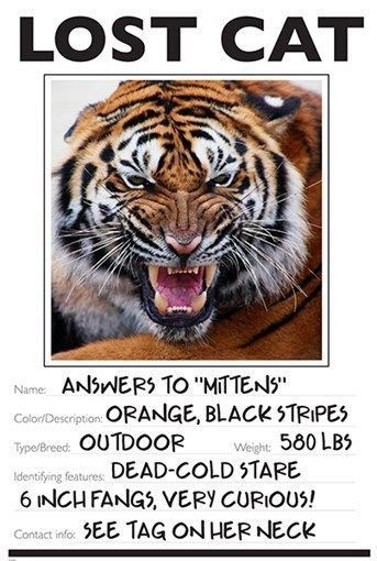 LOST CAT photo poster FUNNY TIGER wild animal KID FRIENDLY unique - missing pet template