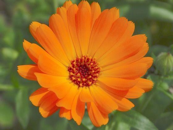4 Flowers Every Tower Gardener Should Grow