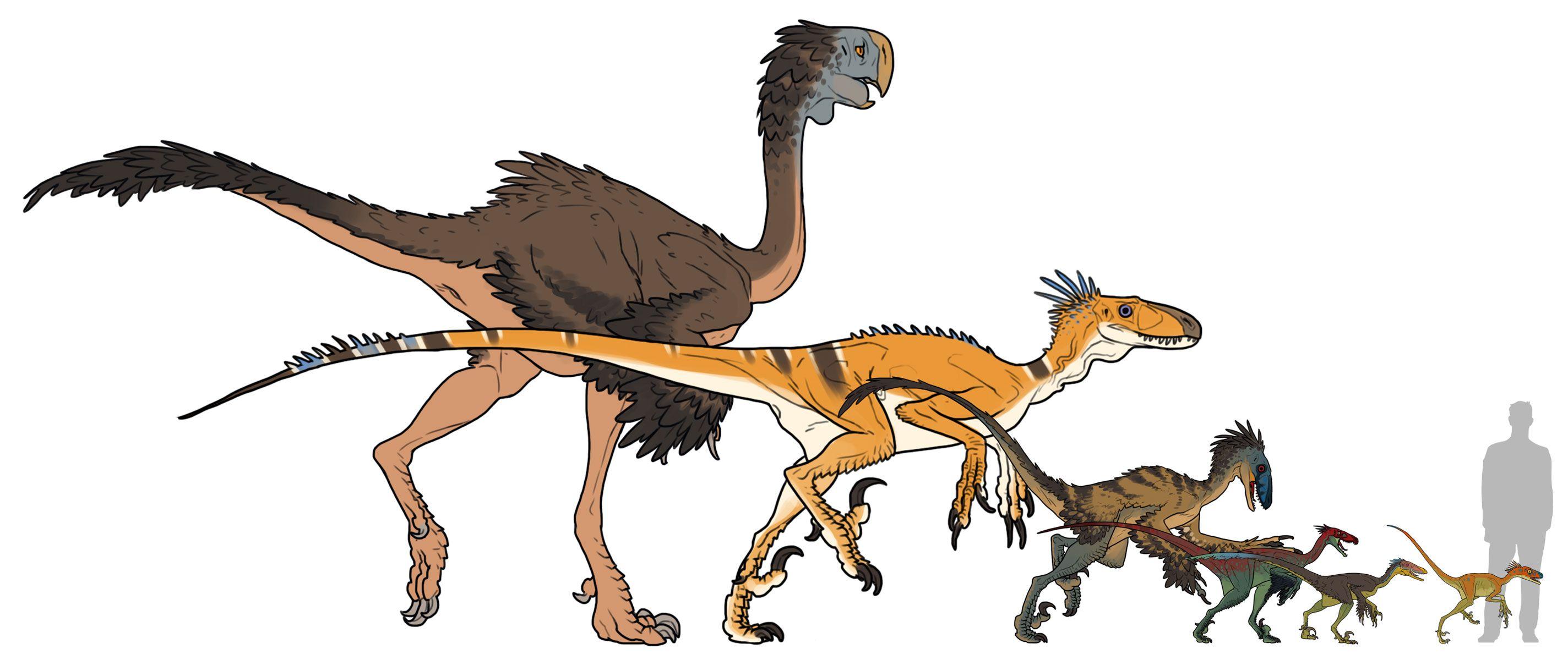 Dromaeosauridae Family By Pietro Ant On Deviantart Prehistoric Animals Prehistoric Creatures Paleo Art
