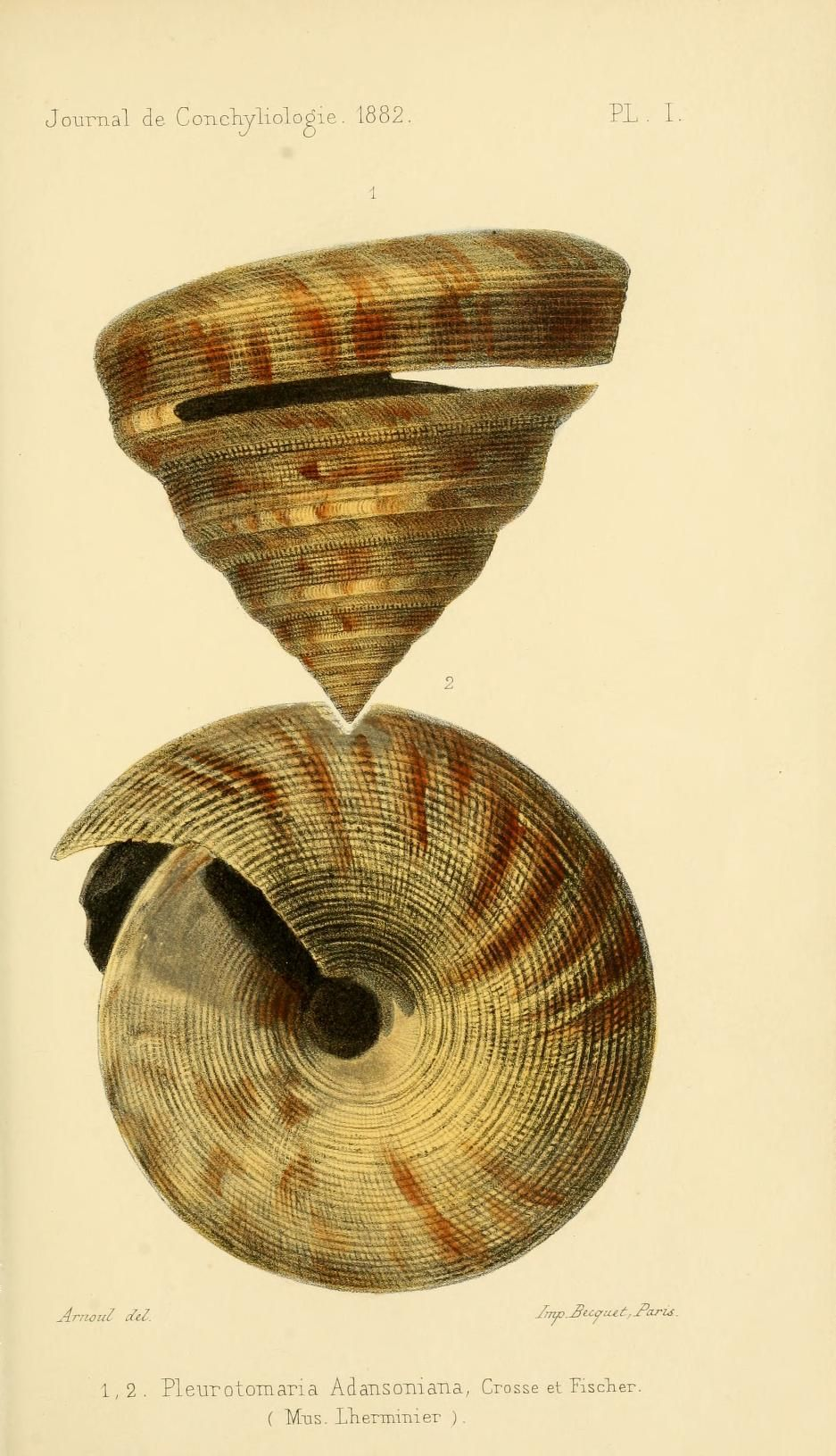 t 30 (1882) - Journal de conchyliologie. - Biodiversity Heritage Library