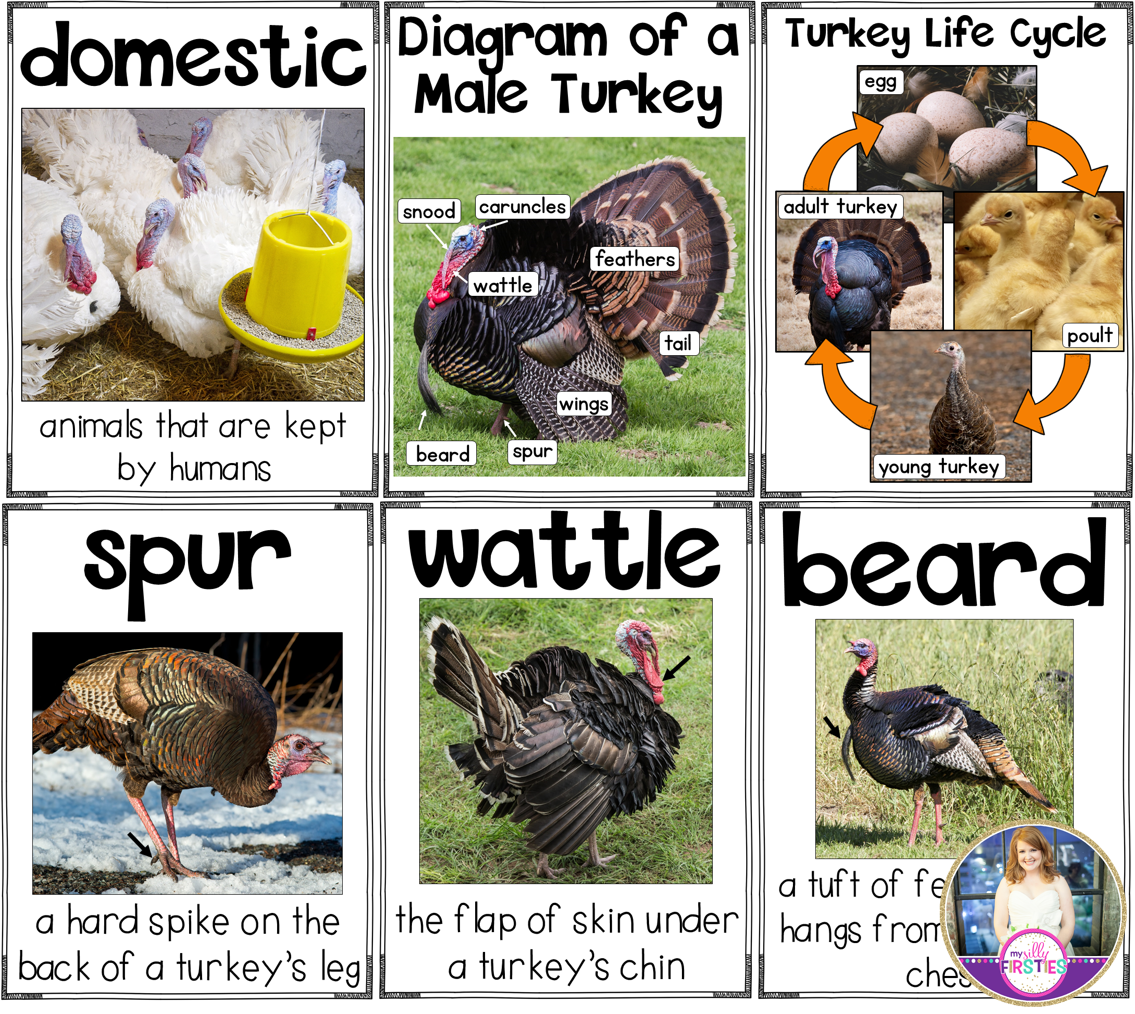 Turkey Activities and Printables for Thanksgiving | Anchor charts ...