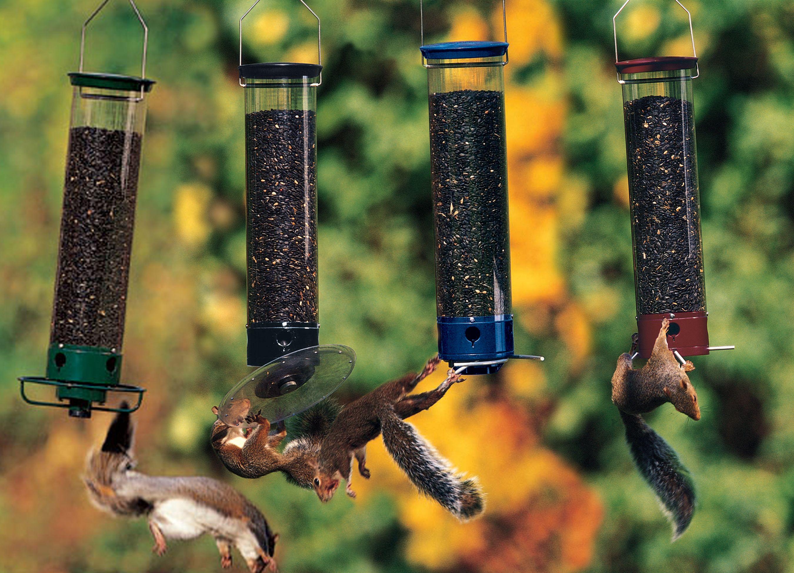 Birding bird how to attract birds bird feeders