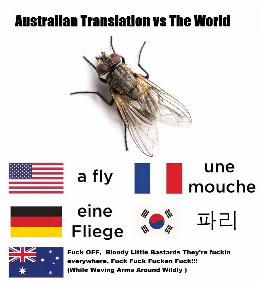 Mosquitos Are Almost As Bad As Flies As Well Australia Funny Funny Aussie Australian Memes