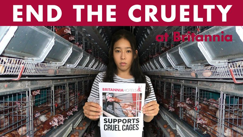 Petition · Robert Ferrari: Britannia Hotels Must Go Cage-Free Now! · Change.org (With images ...