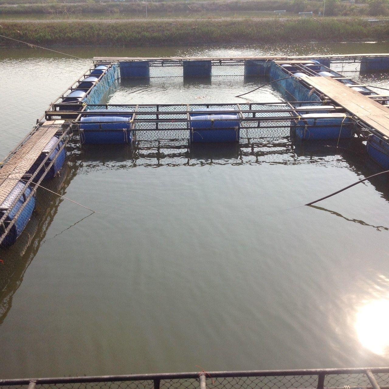กระช งเล ยงปลาหายาก ณ โครงการฟาร มทะเลต วอย าง อำเภอบ านแหลม จ งหว ดเพชรบ ร Banlaem Phetchaburi สถานท ท องเท ยว มอเตอร ไซค