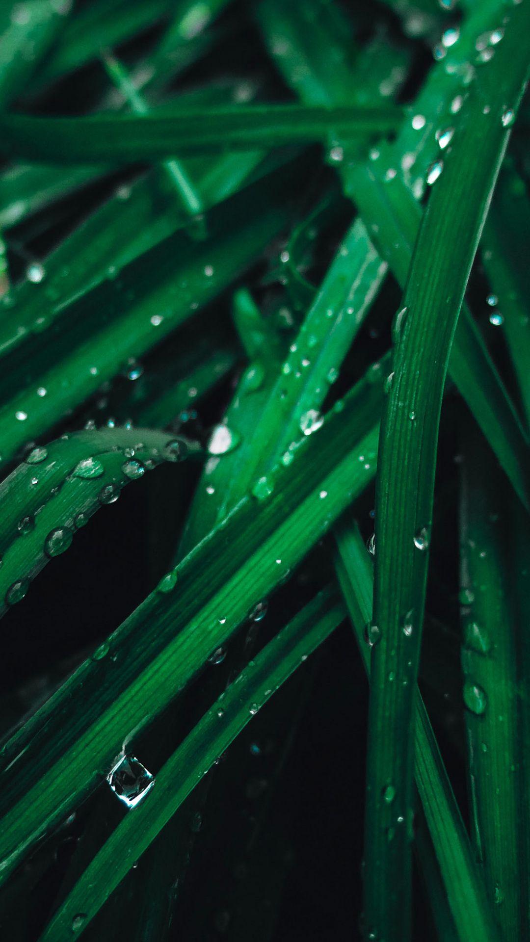 drops close up green grass wallpaper grass wallpaper graphic wallpaper green aesthetic pinterest