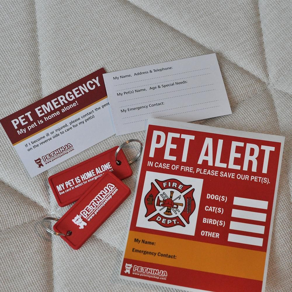 Pet Rescue Accessories Kit For All Pets With Images Pet Emergency Animal Rescue Emergency Care