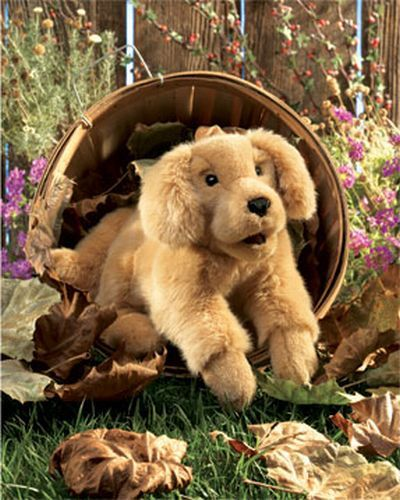 Dog Golden Retriever Puppy Retriever Puppy Dogs Golden