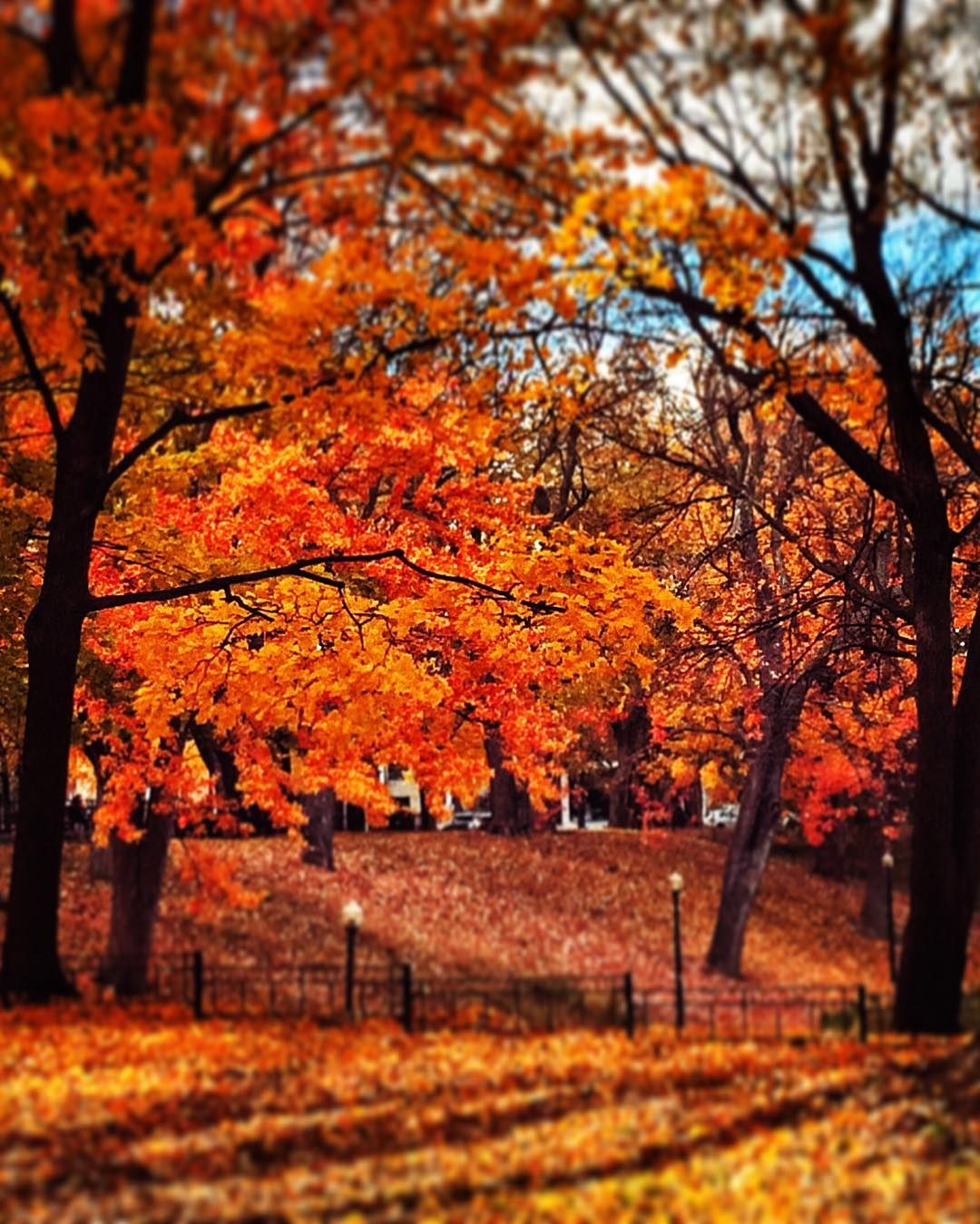 Face Inthecrowd On Instagram Quebec 514 Fall Pedestrian Montreal Montreal Automne Automn Montrealjetaime Mtl Parc Lafo En 2020 Quebec Instagram Montreal
