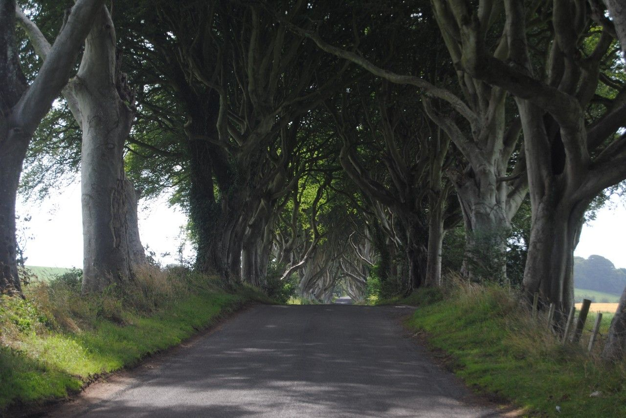 On a small section of Bregagh Road, in the Northern Ireland parish of Ballymoney, rows of beech trees stretch their limbs from either side to form a canopy of intertwining boughs. This dramatic...