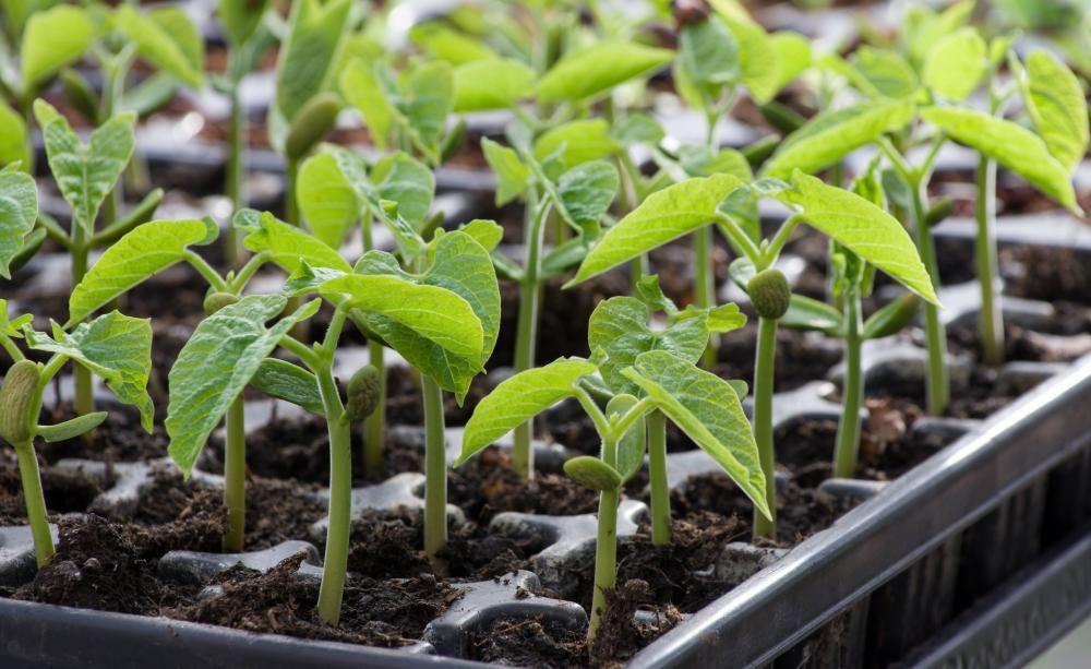 Pflanzen, Zeiten Und Tipps Gemuse Pflanzen Ideen Tipps Garten