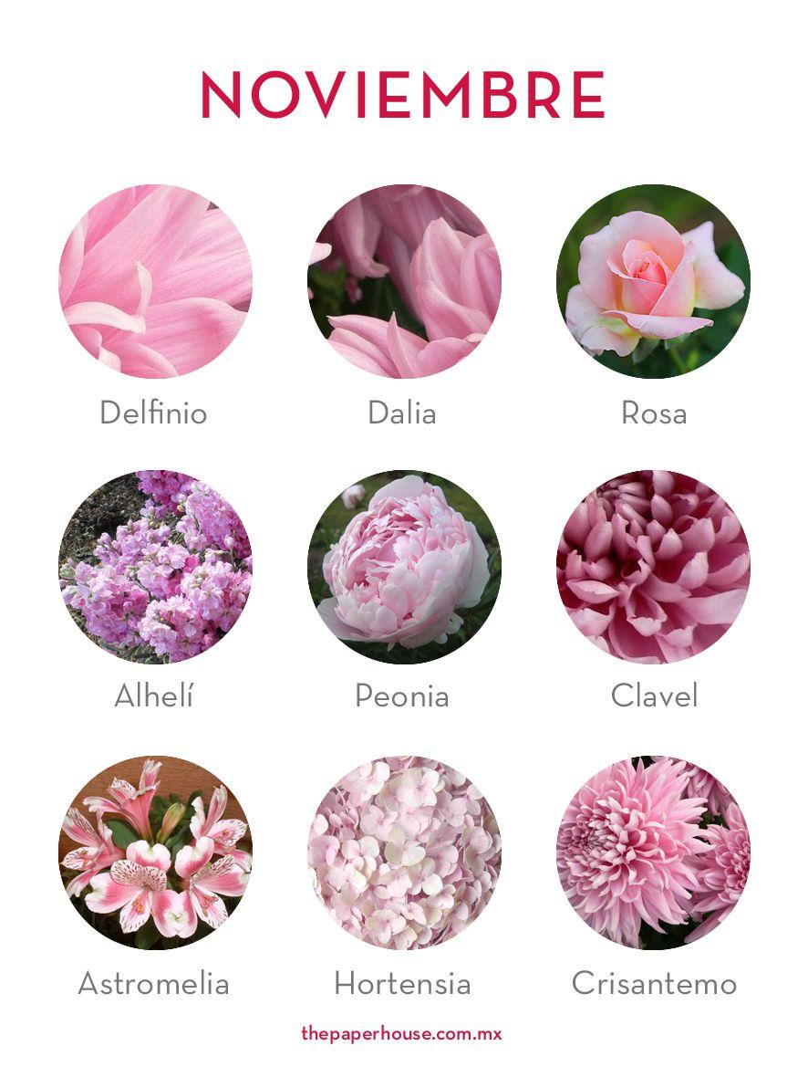 Flores De Noviembre Floresdetemporada Floresdenoviembre Flores Noviembre Thepaperhouse Tipos De Flores Nombres De Flores Flores De Temporada