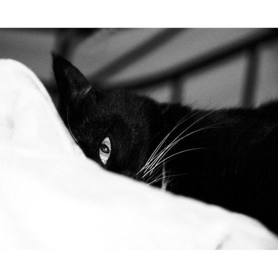картинки доброе утро с черной кошкой просто поставить
