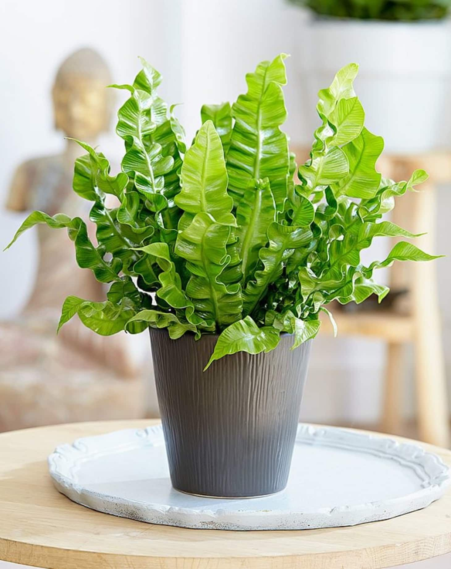 7 Houseplants With The Most Unique Leaves We Ve Ever Seen Apartment Therapy Plants House Plants Indoor Foliage Plants