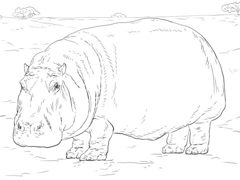Hipopótamo Dibujo para colorear | animales | Pinterest | Hipopótamo ...