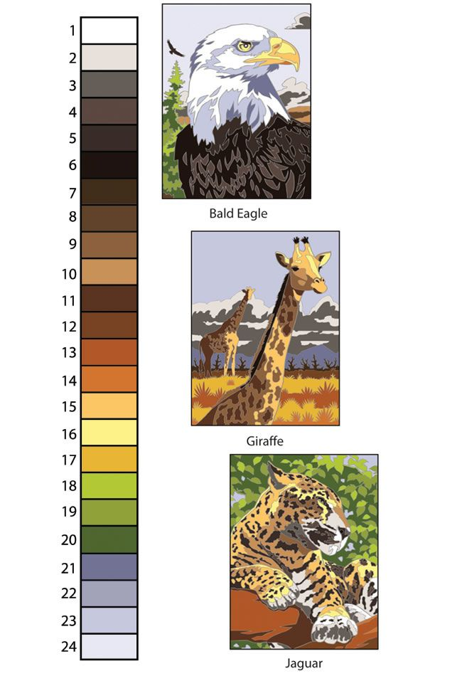 Creative Haven Wildlife Color By Number Coloring Book Colour Guide