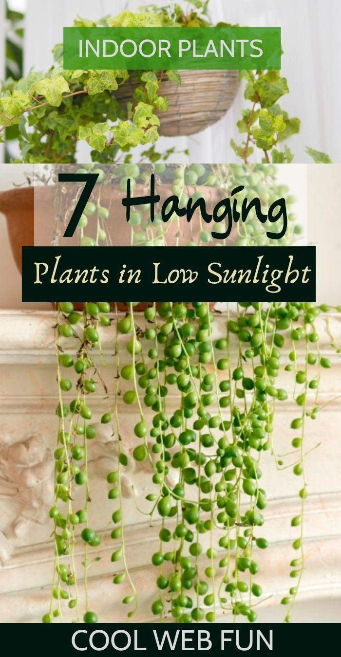 7 Best Indoor Hanging Plants with Low Maintenance - Cool Web Fun