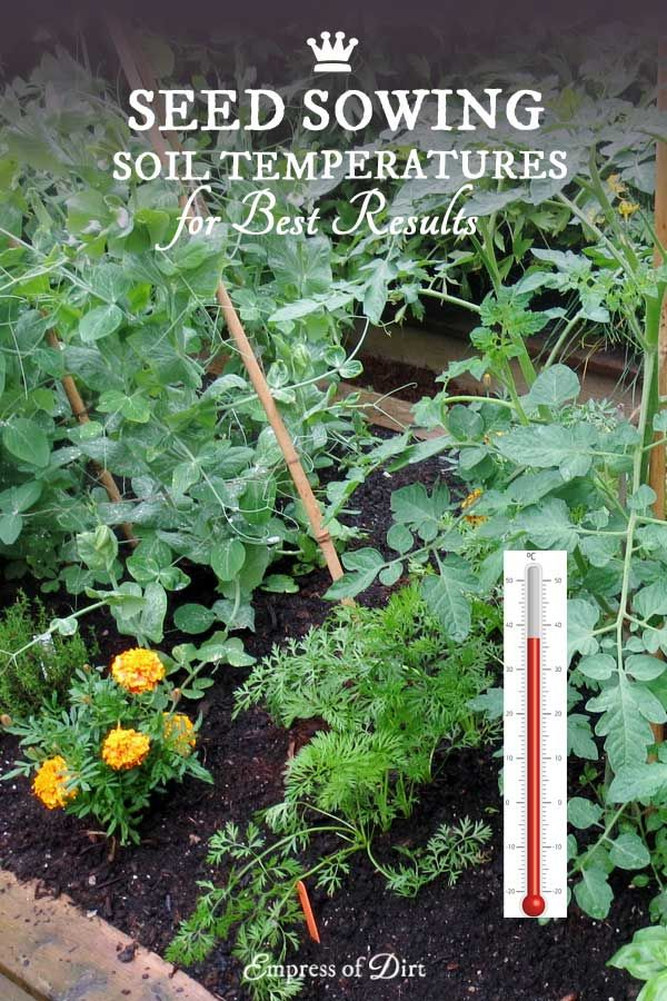 Best Soil Temperatures For Sowing Seeds. Organic GardeningGardening Tips Vegetable ...