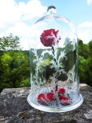 Rose La Belle Et La Bete Rose Naturelle Eternelle Stabilisee Cloche
