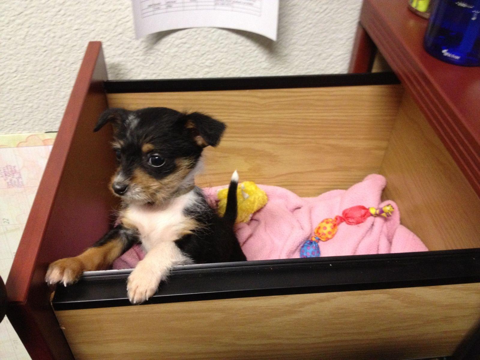 Puppy Up For Adoption At Petsmart Animals Puppies Petsmart