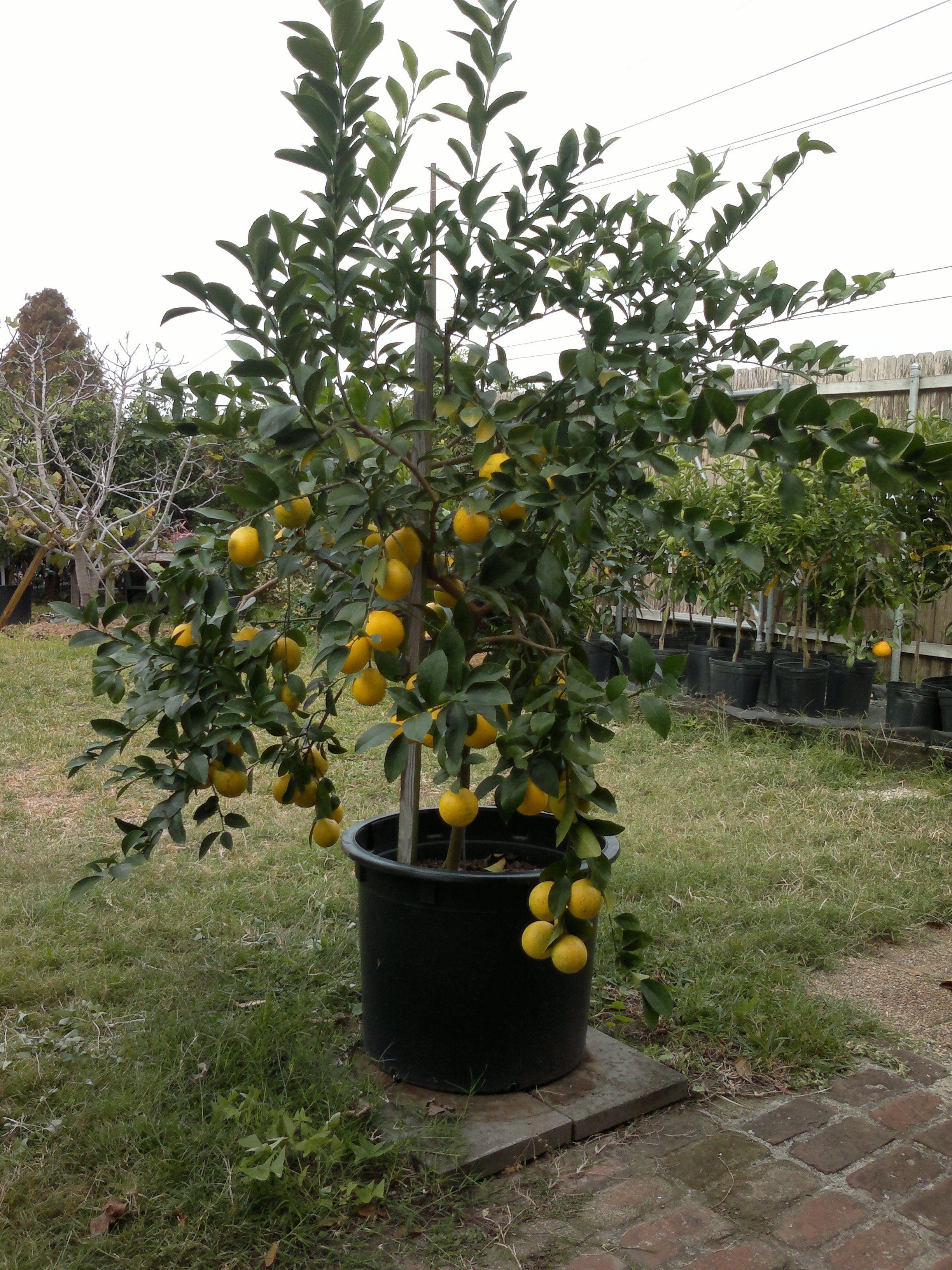 choosing fruit trees