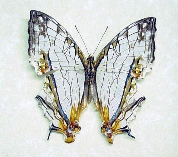 Framed Butterfly Real China Map Butterfly By