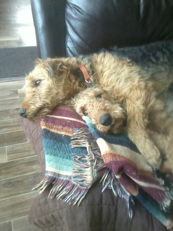 Riley and Izzie relaxing