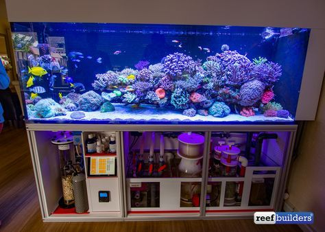 dutch reef tank wesley vreeswijk 12 marinho pinterest. Black Bedroom Furniture Sets. Home Design Ideas