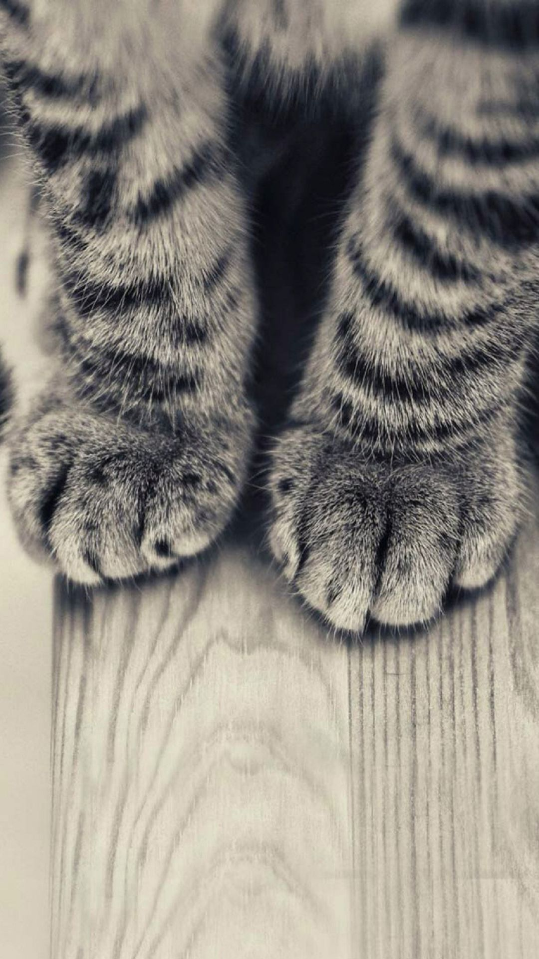 Animals Iphone 6 Plus Wallpapers Striped Kitten Legs Wooden Floor Iphone 6 Plus Hd Wallpaper Iphone 6 Plus Kitten Wallpaper Cat Wallpaper Animal Wallpaper