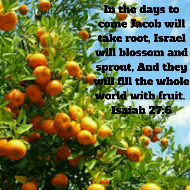 Isaiah 27:6  - prophecy fulfilled in Israel! What a mighty God we serve!