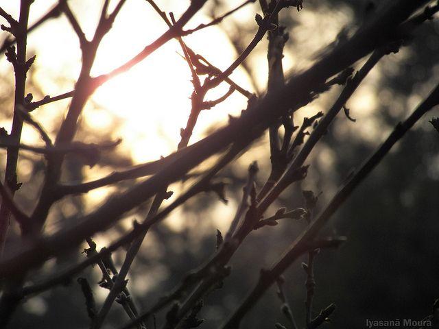 O sol por entre os galhos secos de outono.
