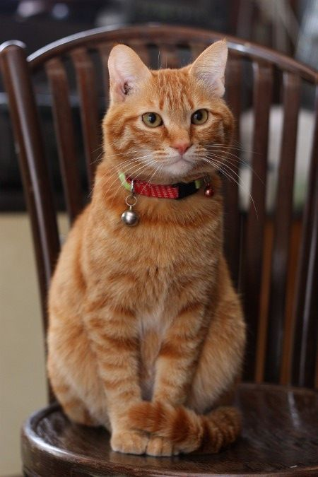King Collin S Cat Palace Public Group Facebook Cute Cats And Kittens Cute Cats Orange Tabby Cats