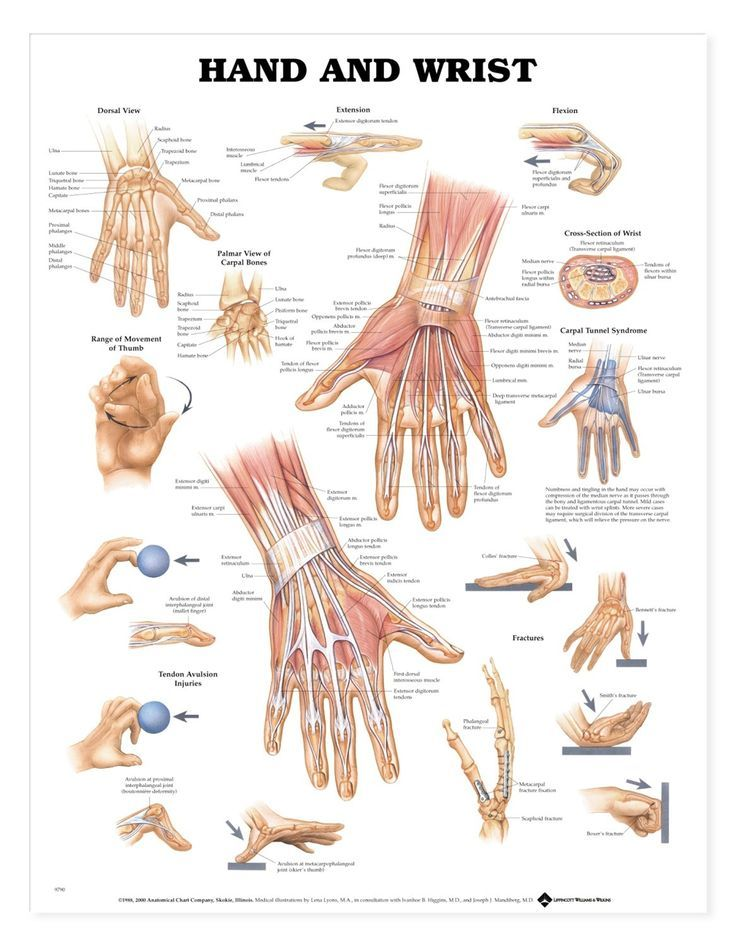 Hand and Wrist anatomy and movements https://i.pinimg.com/736x/dc/3a ...