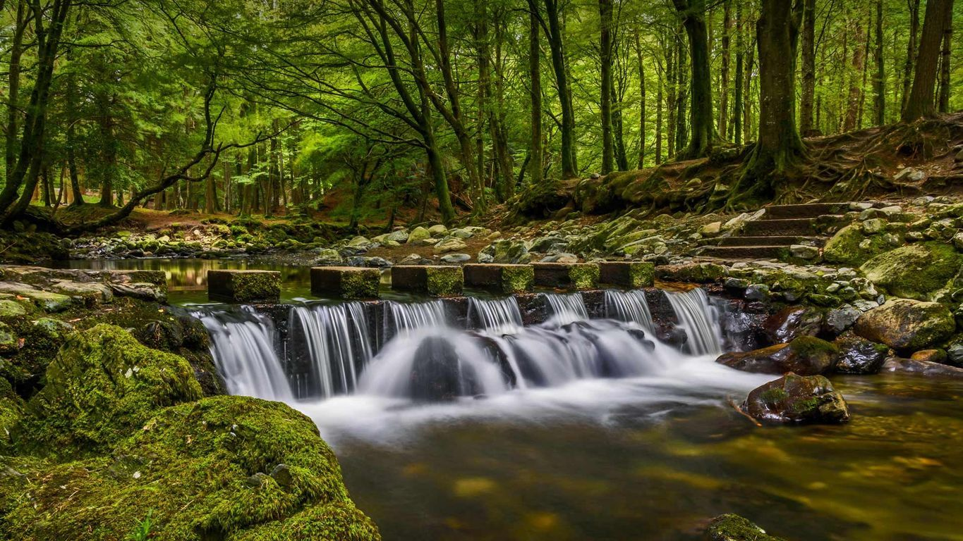 Stepping Stones In Tollymore Forest Park County Down Northern Ireland Forest Park Waterfall State Forest