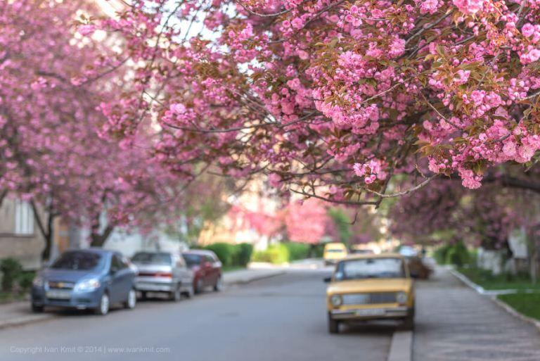 Sakura Blossoms Not Just In Japan But Ukraine As Well Keep Cruising World Sakura Blossom Art Photography
