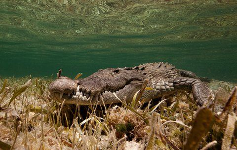The world's top 10 reptiles in pictures Underwater