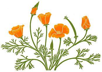 California Poppies Clip Art