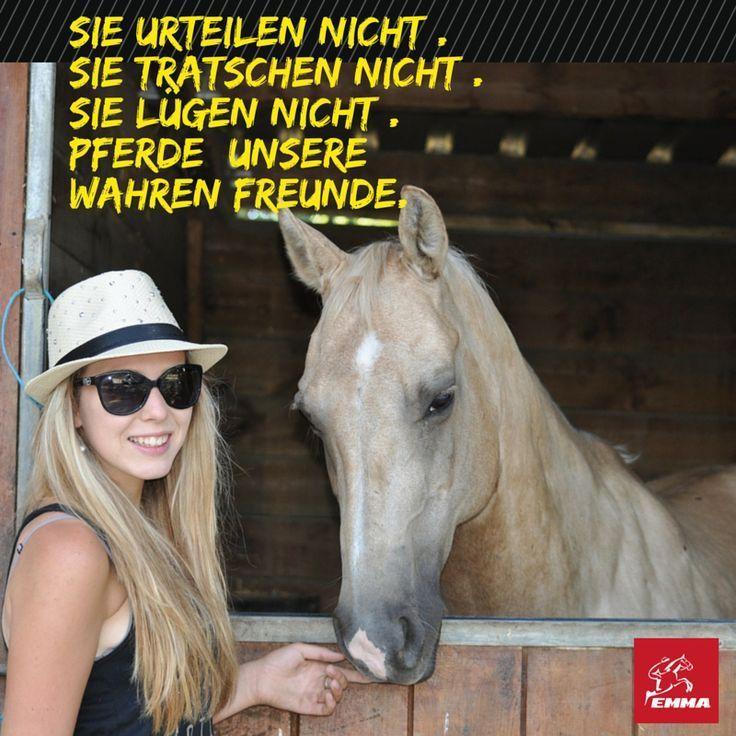 Pferdesprüche & Zink Pferdemmapferde... (10