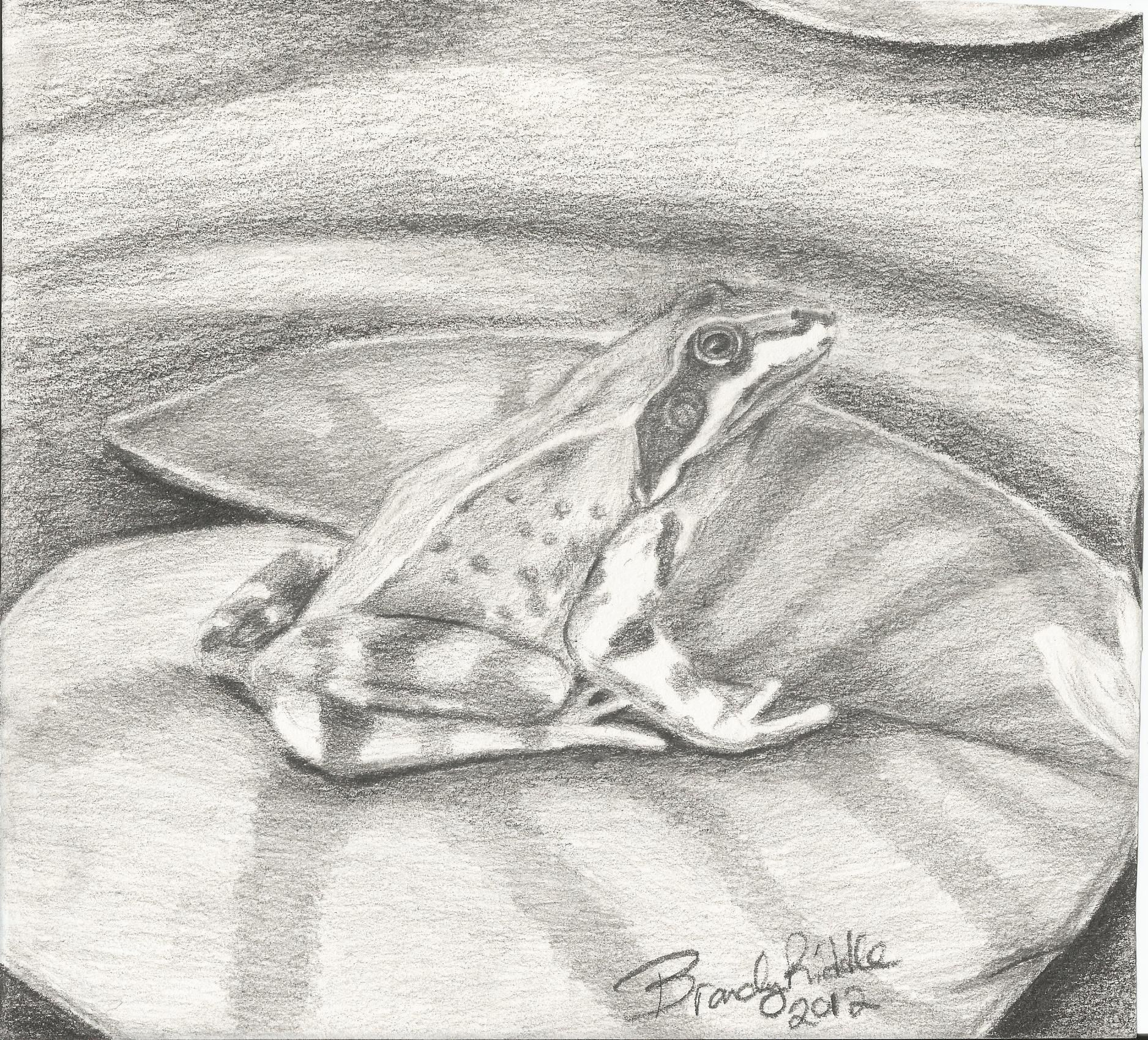 quick pencil sketch of frog on lilly pad
