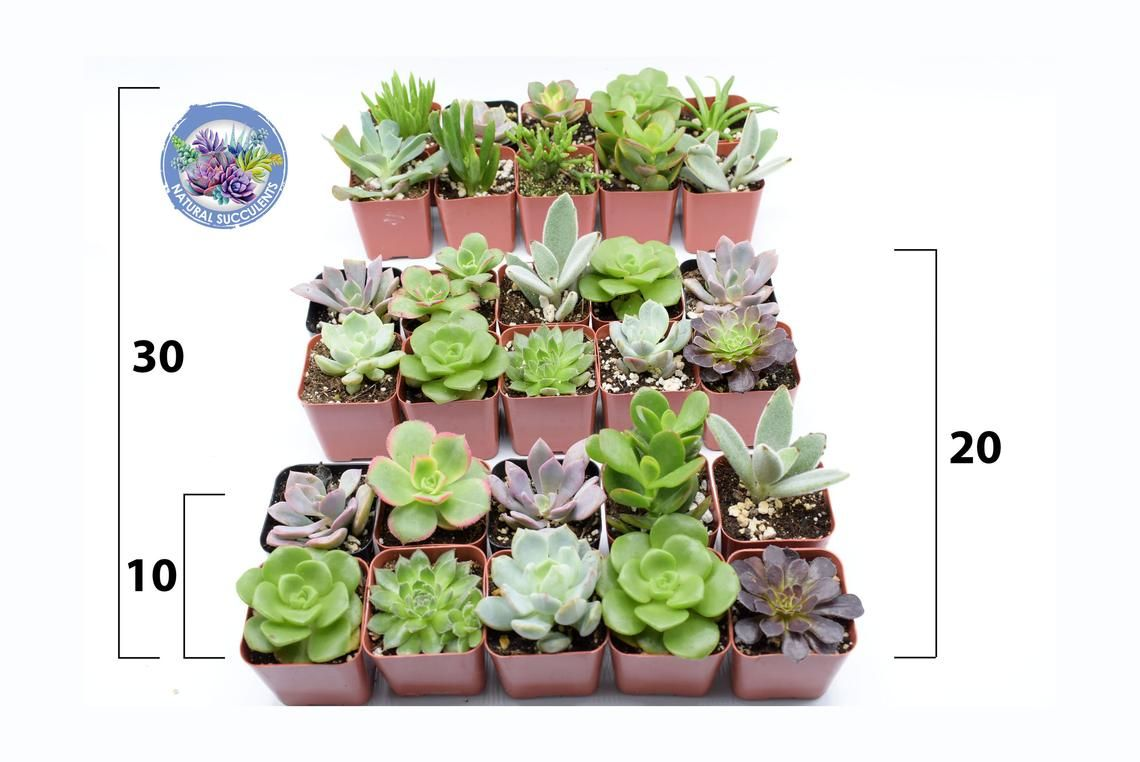 30++ Succulent wedding favors etsy ideas in 2021