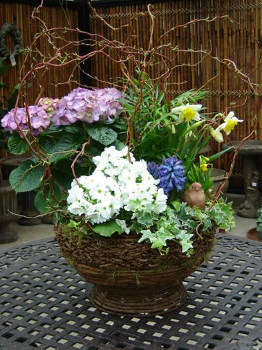 Mixed Plants, baskets, arrangments of tropical plants, potted ...