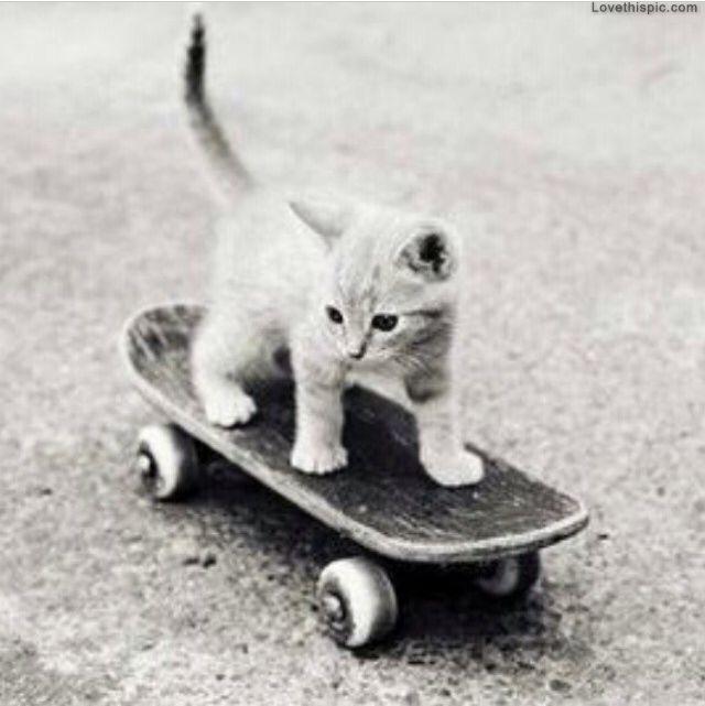 Baby Kitten Skating
