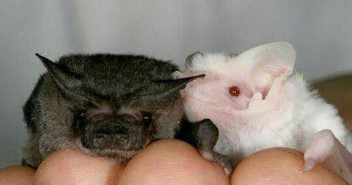 #Batties: http://ift.tt/2jPE1yO