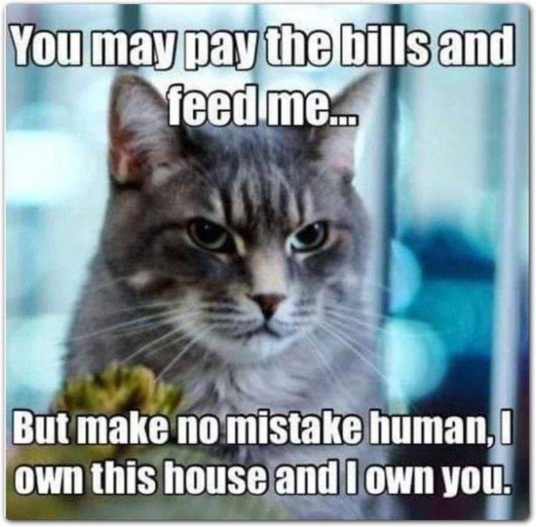 24 Funny Animals Memes 3 10 #katzengeburtstag