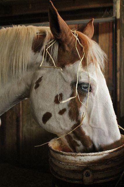 Rowdy's hairdresser! Embedded image permalink